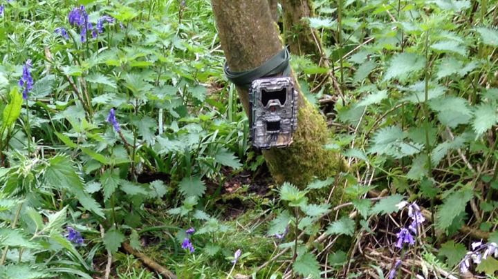 Trail Cam In Position