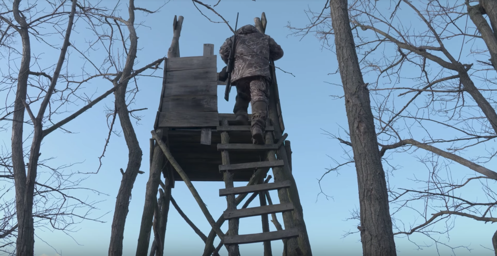 Driven boar from a high seat