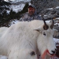 Mountain Goat Hunting British Columbia Total Outdoor Adventures