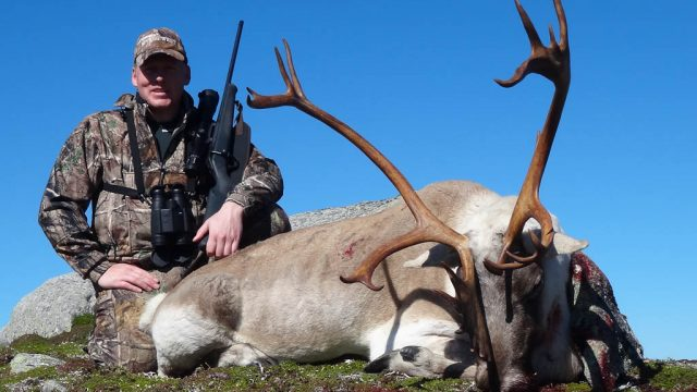 Hunting Woodland Caribou in Newfoundland with Ironbound Outfitters