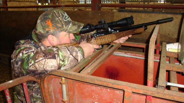 Feral Frenzy-The Boys Are Out with the Airguns
