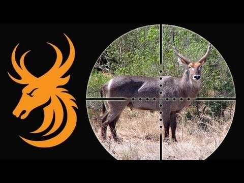 Waterbuck sparring at night through the Pulsar N550 Digisight