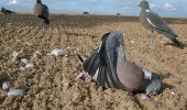 Pigeon Shooting with an Armsan A612 Shotgun