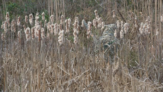 Realtree MAX-5. Wildfowling Concealment Redefined
