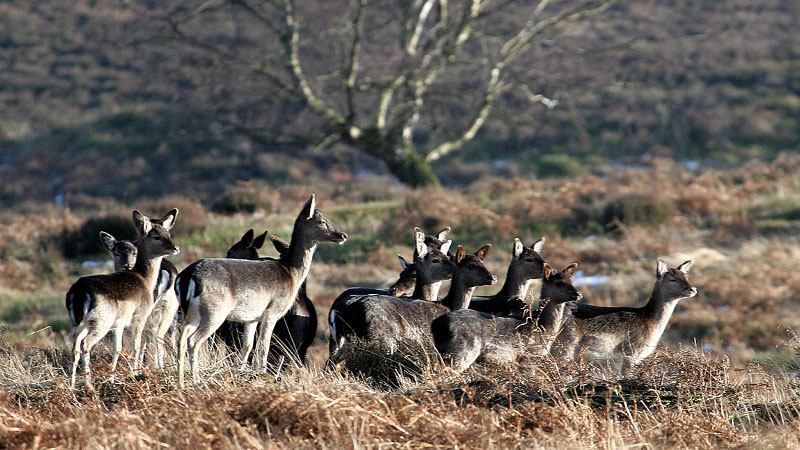 How To Keep Your Deer Numbers In Check – Cervus UK