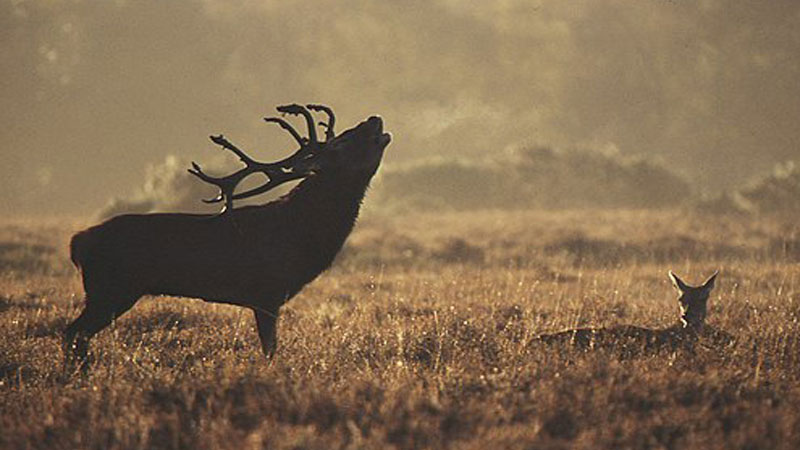 5 Things You Didn't Know About Red Deer.