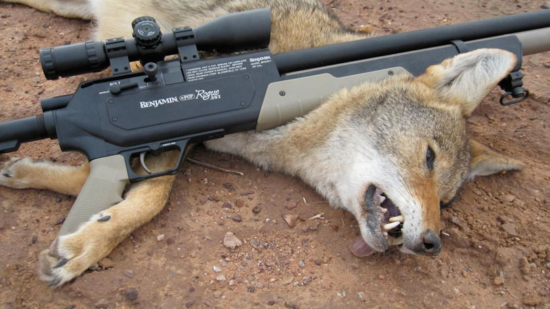 Benjamin Rogue .357 – Big Game Hunting Airgun