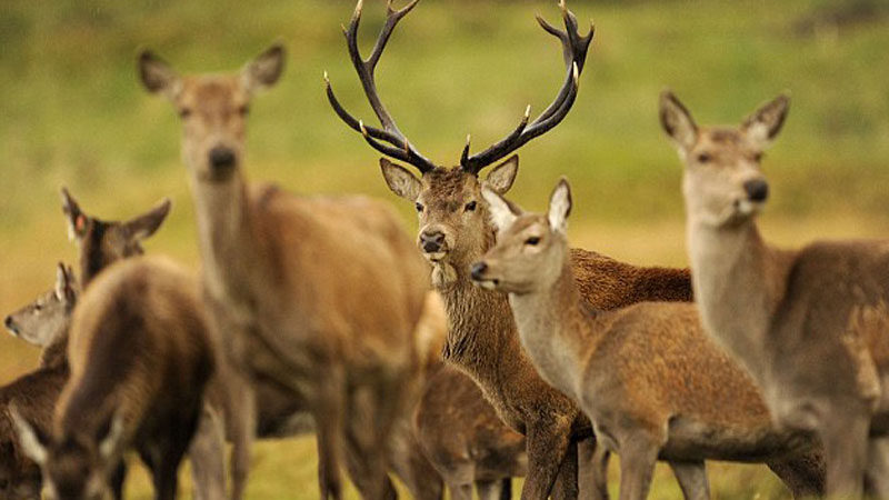 Red deer can take some stopping, especially in the rut. I use no less than .308 for reds nowadays.