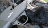 Corvid Control With The Armsan A612