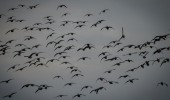 Get Ready for Wildfowl Season