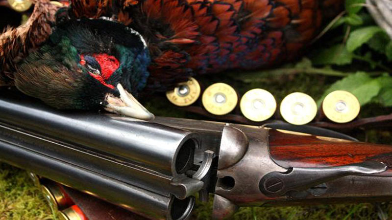 Top Tips For Better Pheasant Shooting – Part 2