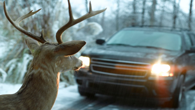 Report on Road Casualties and Deer Vehicle Collisions