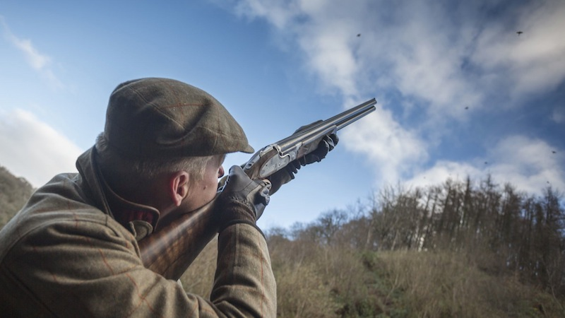 Driven Pheasant Shooting with GunsOnPegs: The Bodidris Shoot