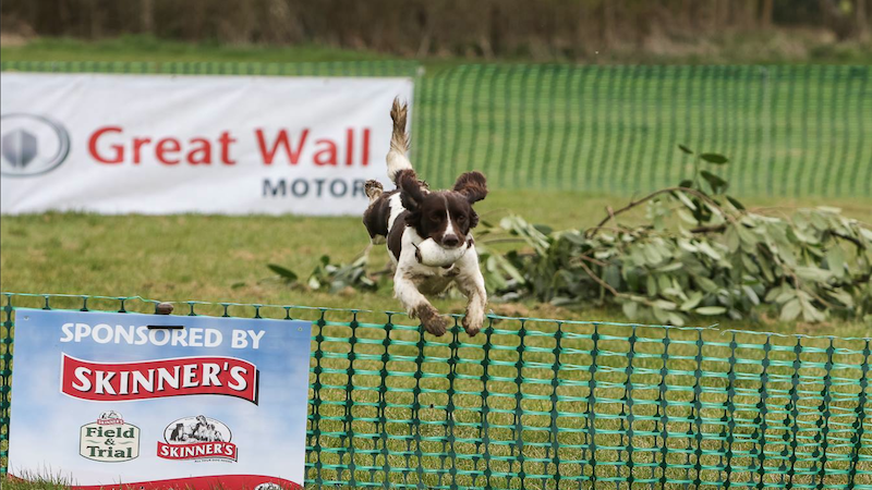 Great Wall Motor World Series Gundog Championship with Skinner's at the Kelmarsh Country Show
