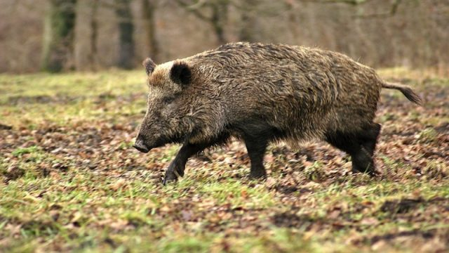 K&K: Hunting Wild Boar & Deer in Germany