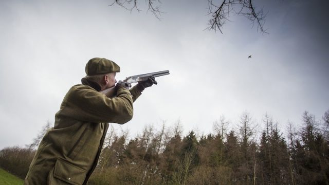 Driven Pheasant Shooting: The Wolseley Park Shoot