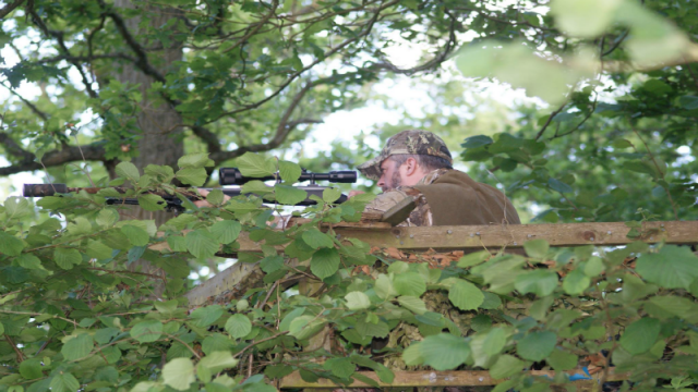 Deer Stalking For Beginners With Douglas Wheeler
