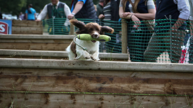 2015 Lowther Show | Great Wall Motor World Series Gundog Championship