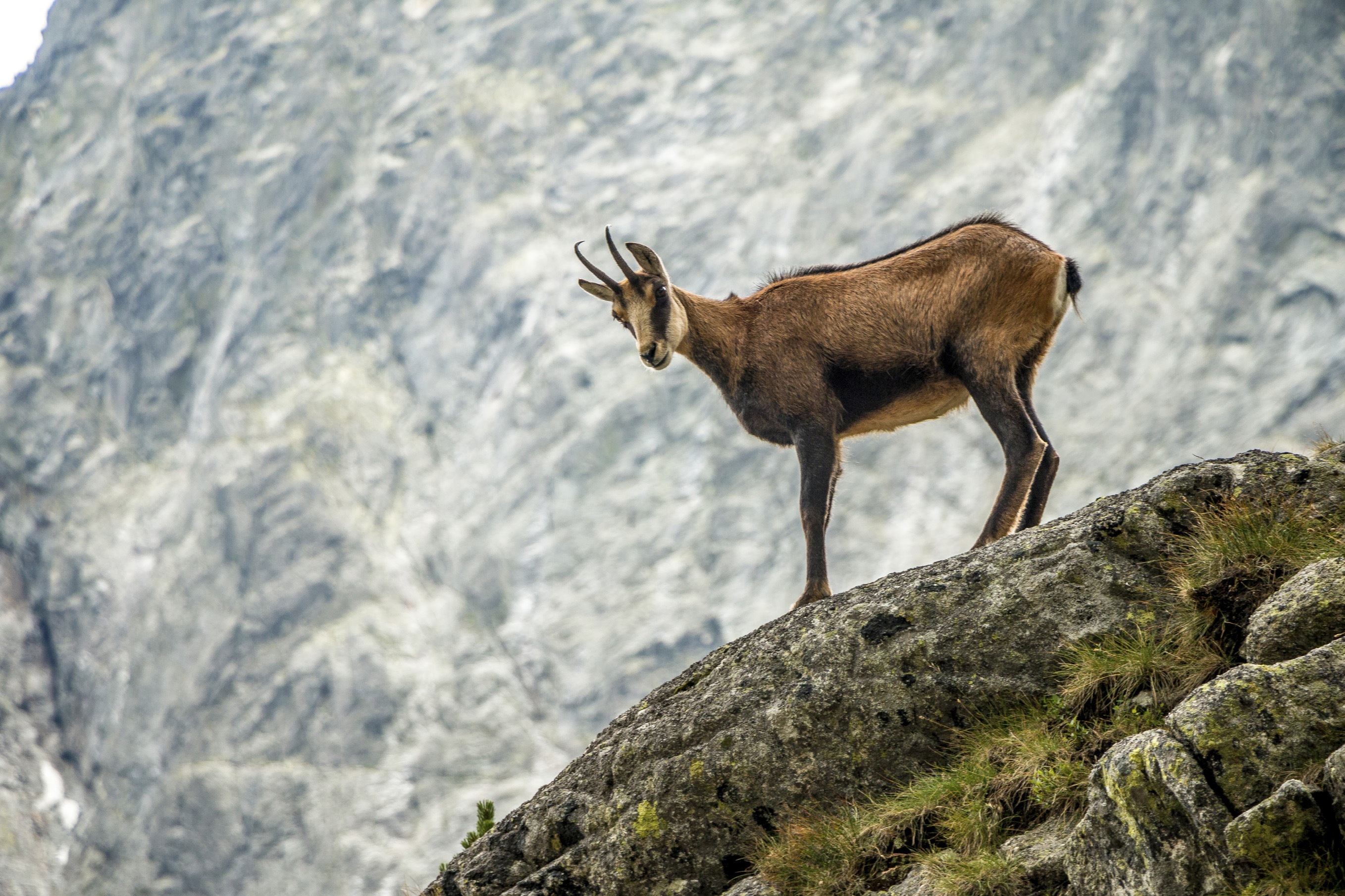 Chamois Hunting with Owen Beardsmore