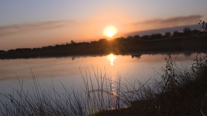 Duck Shooting in South Africa with Ian Harford