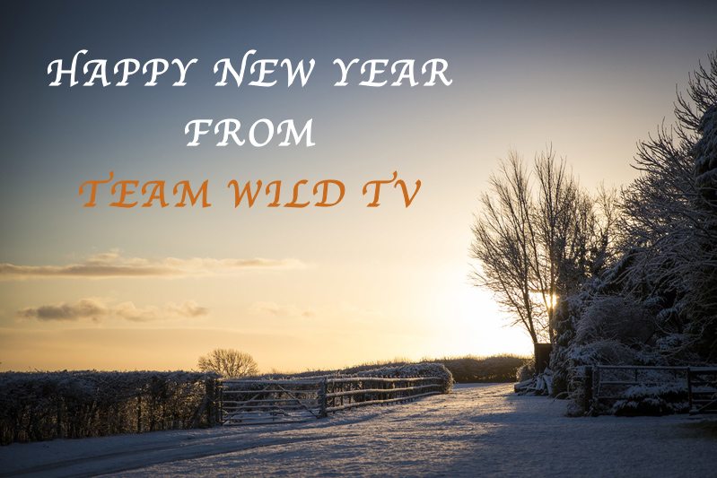 Happy New Year From Team Wild TV
