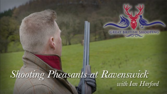 Shooting Pheasants at Ravenswick with Ian Harford