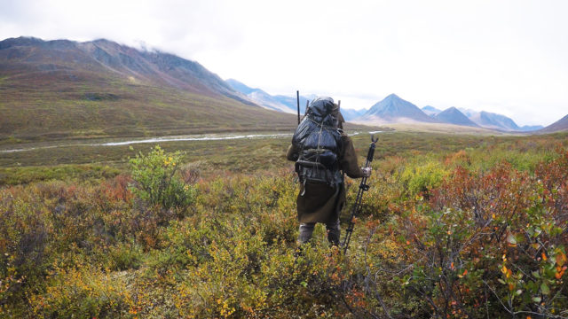 Self-guided Moose & Caribou Hunting in Alaska: Episode 3 – Butchering Big Bulls & Packing Out